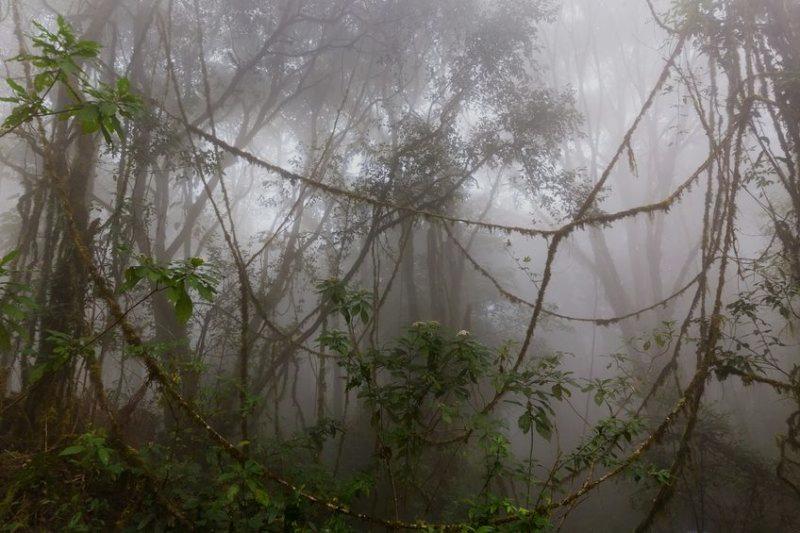 It feels like you're lost in a jungle!